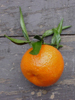 Mandarine, BIO