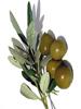 Olive, pomace