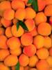 Abricot, BIO