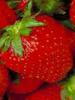 Strawberry: Aroma