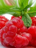 Raspberry: Aroma