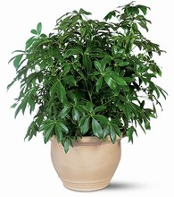 Green Plant  ($29.95 to $199.95$)