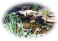 How To Build A Pond With A Pre-Formed Pool